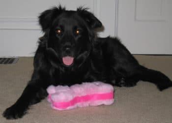 Bessie s newest motoring companion, Tosh!
