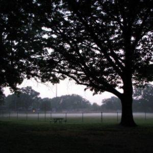 Fog descends on the ballpark