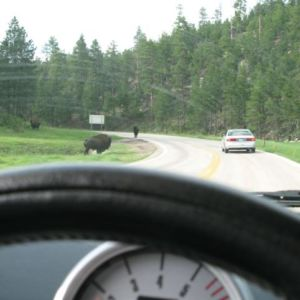 Drive slowly, you never know who you're going to be sharing the road with.