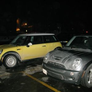 Bessie and her fellow MINI, Radcliffe.
